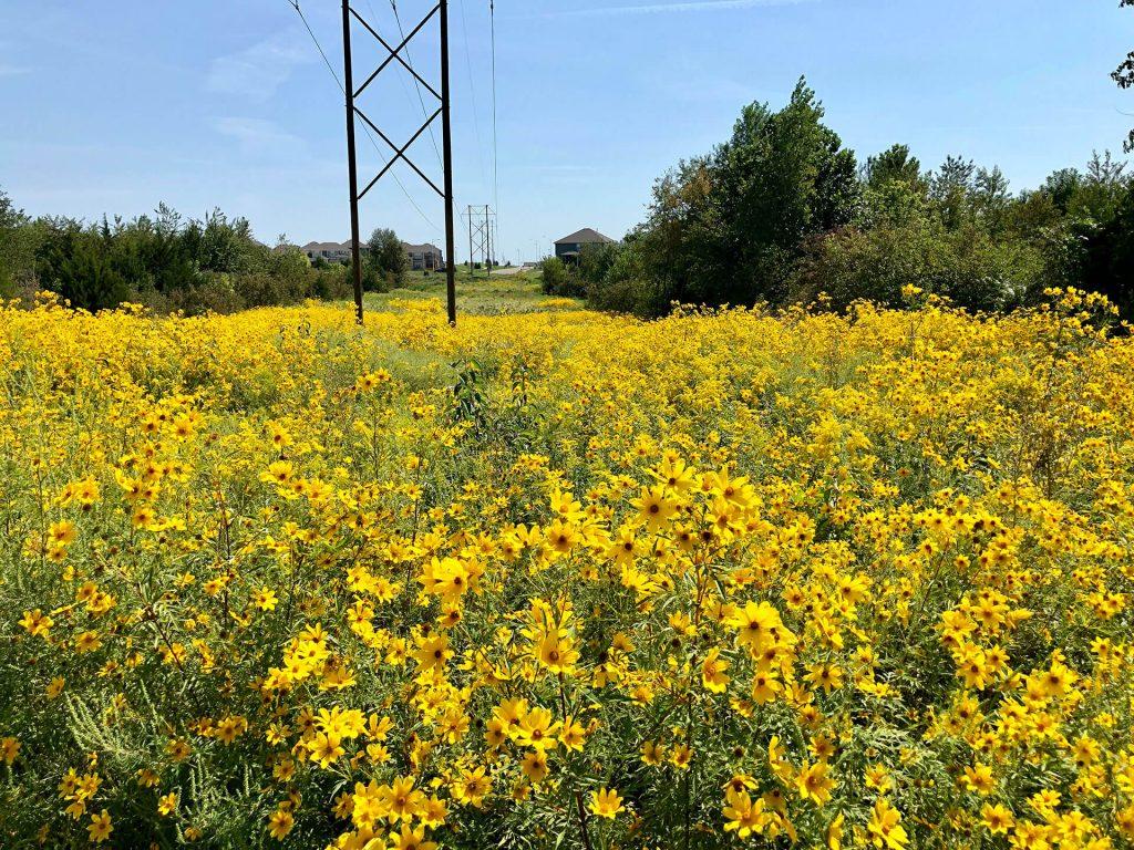 Anne Garney Park in Kansas City, Missouri - Yellow Fall Flowers